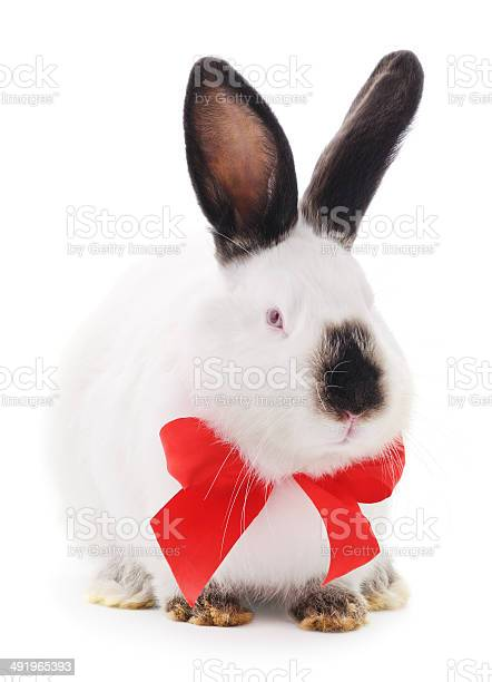 Rabbit picture id491965393?b=1&k=6&m=491965393&s=612x612&h=ec34 i7cq5vdsxnrtderprcw6099vbitbfnksizudug=