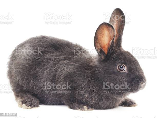Rabbit picture id491965401?b=1&k=6&m=491965401&s=612x612&h=aqqmjopg4qja pgm93cdpuyvdl2nsnpkcbvjkzwlgy8=