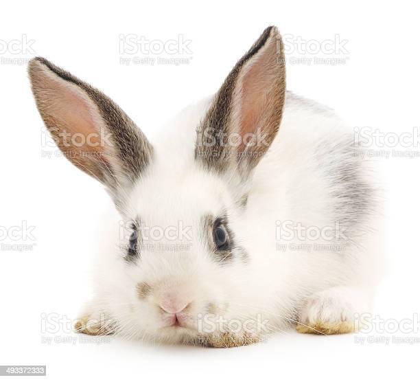 Rabbit picture id493372333?b=1&k=6&m=493372333&s=612x612&h=mowsrf 7ai66pibu clteojsczuzx0b3dqs1o9ld4ou=