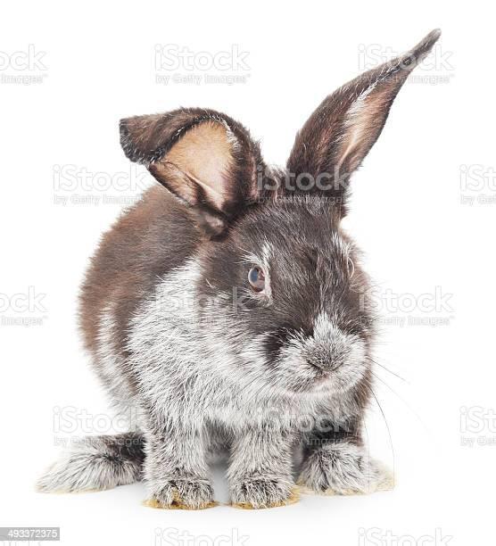 Rabbit picture id493372375?b=1&k=6&m=493372375&s=612x612&h=c yhkbhcfjo9rnycrhlnqypjcommmrcagei5rwqzmr8=