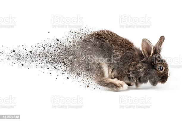 Rabbit picture id511927318?b=1&k=6&m=511927318&s=612x612&h=1qmqhxhjl8gmopfhnjdredtpdmfdikl4 ftwhd3r6lg=