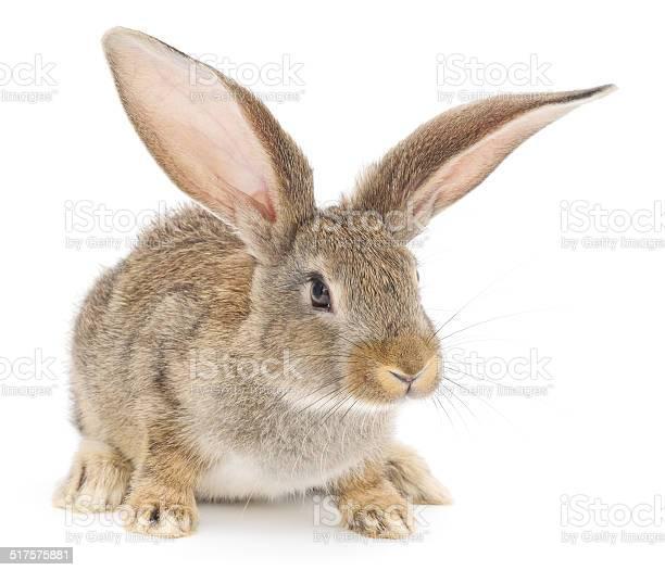 Rabbit picture id517575881?b=1&k=6&m=517575881&s=612x612&h=rj8wswoiv0qgvblcvaefto9vwdbczmiksbfmdzqwmrq=