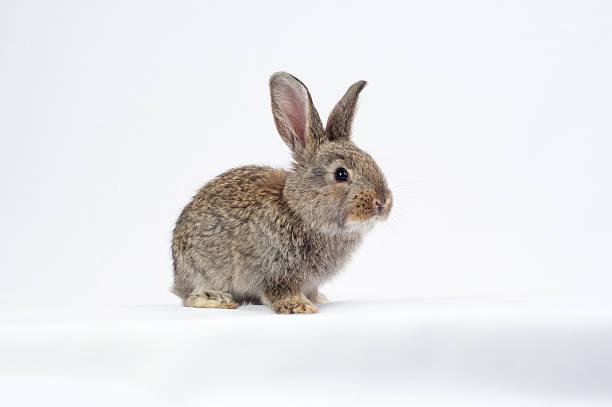 kaninchen - schöne osterbilder stock-fotos und bilder