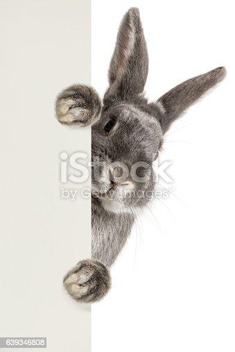 Cute rabbit holding a sheet of paper