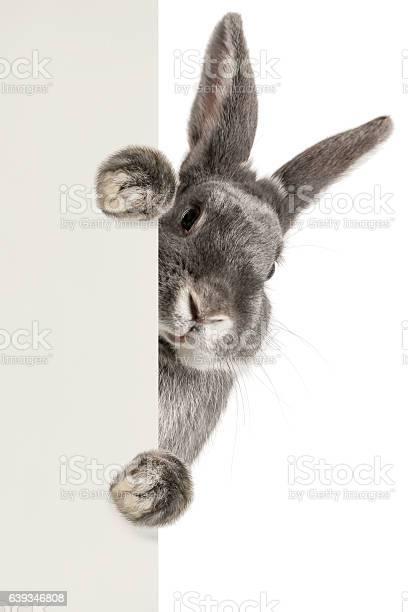 Rabbit picture id639346808?b=1&k=6&m=639346808&s=612x612&h=c r1jnaemdeyngsufw8fdhof6k34efdqpqai1lekna4=