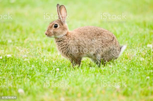 Rabbit picture id678095904?b=1&k=6&m=678095904&s=612x612&h=ah3d0tgbw8c0xro9ojguxdh8rof42uwb0l1snkcr93i=