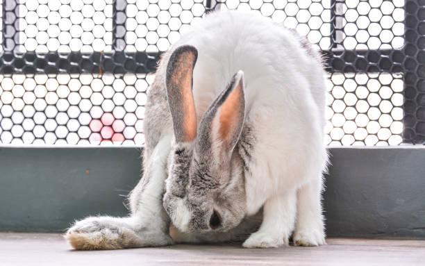 Rabbit picture id840400698?b=1&k=6&m=840400698&s=612x612&w=0&h=ck6y6gzuqixr0gvykhqn1fbtwgdmjb8gdocx8 tps64=
