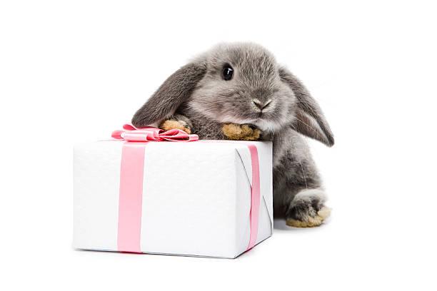 rabbit - rabbit animal stock photos and pictures