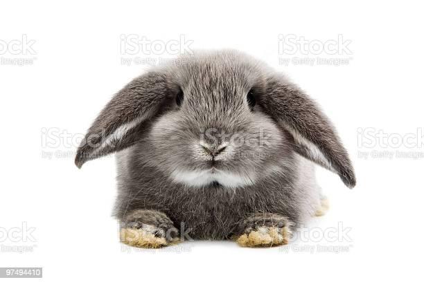 Rabbit picture id97494410?b=1&k=6&m=97494410&s=612x612&h=warska07ozxcqs9xdvdmdulmilmo8m likrjcs6yvny=