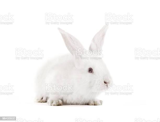 Rabbit picture id98433502?b=1&k=6&m=98433502&s=612x612&h=u43b9jqp9kw4dtcwz6cbg5md4jzuec4nwqfibocfxze=