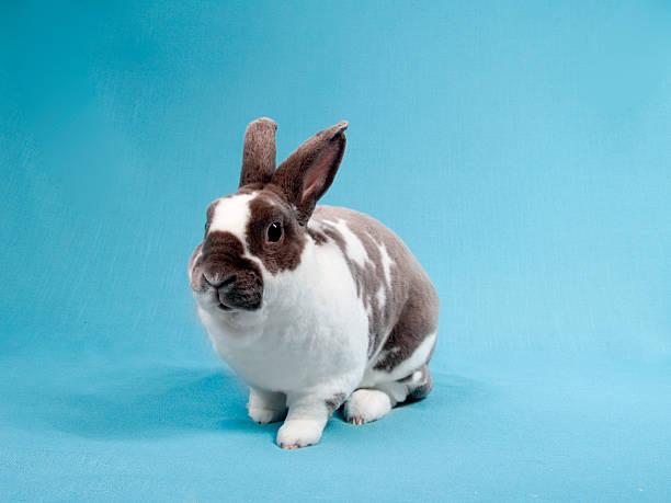 kaninchen-rennen - plüschhase stock-fotos und bilder