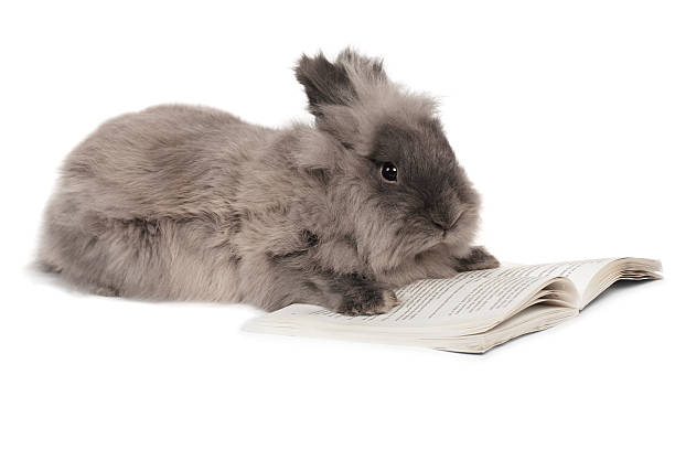 Rabbit reading stock photo