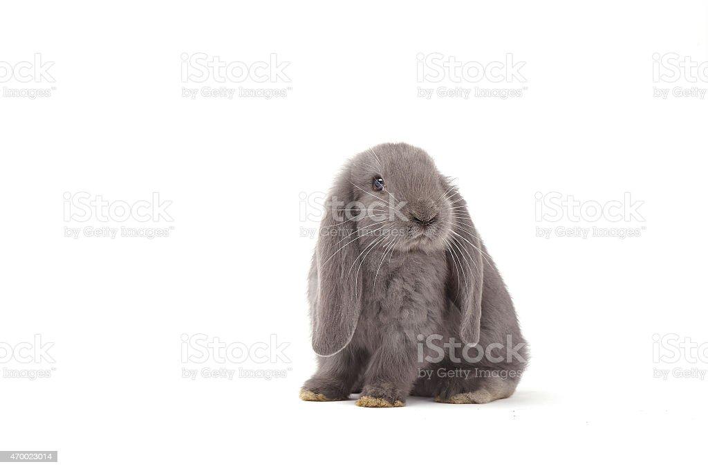 Rabbit sitting against white background stock photo