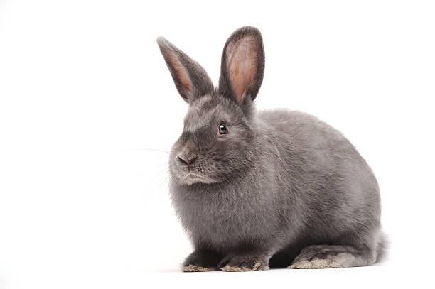 Kaninchen sitzen vor weißem Hintergrund – Foto