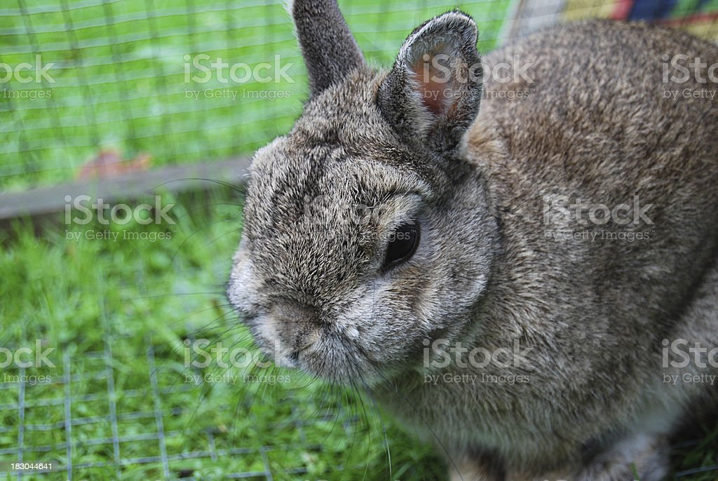 Rabbit sitting in an outdoor cage stock photo