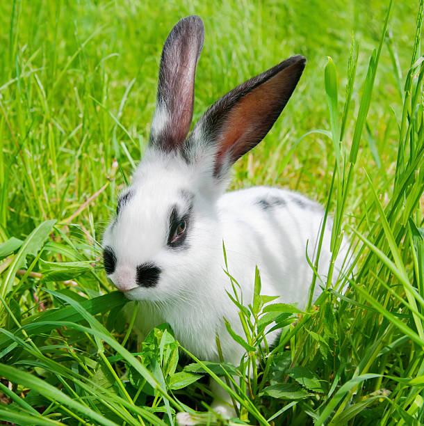 Kaninchen Sitzen im Gras, lächelt in die Kamera. – Foto