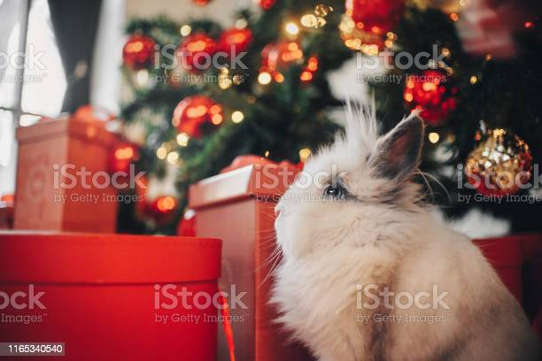 Rabbit sitting on the christmas decorations background picture id1165340540?b=1&k=6&m=1165340540&s=612x612&h=wpvpuwwrxiosm gm 8soia6cx8jaaxnybbd0oqo8qxk=