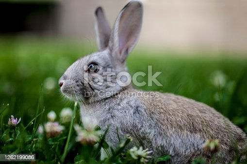 Rabbit sitting on the grass