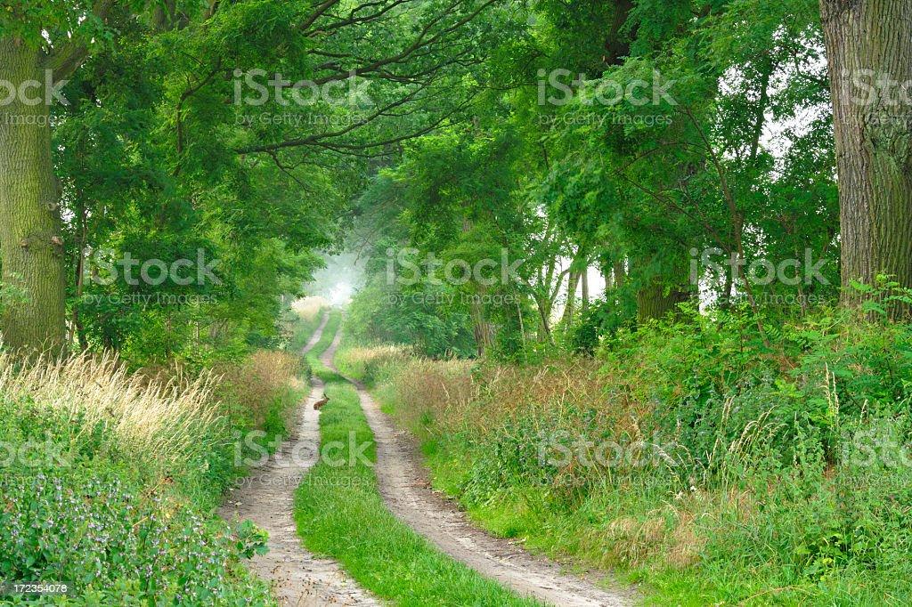 Conejo sentada en granja de árboles en pista foto de stock libre de derechos