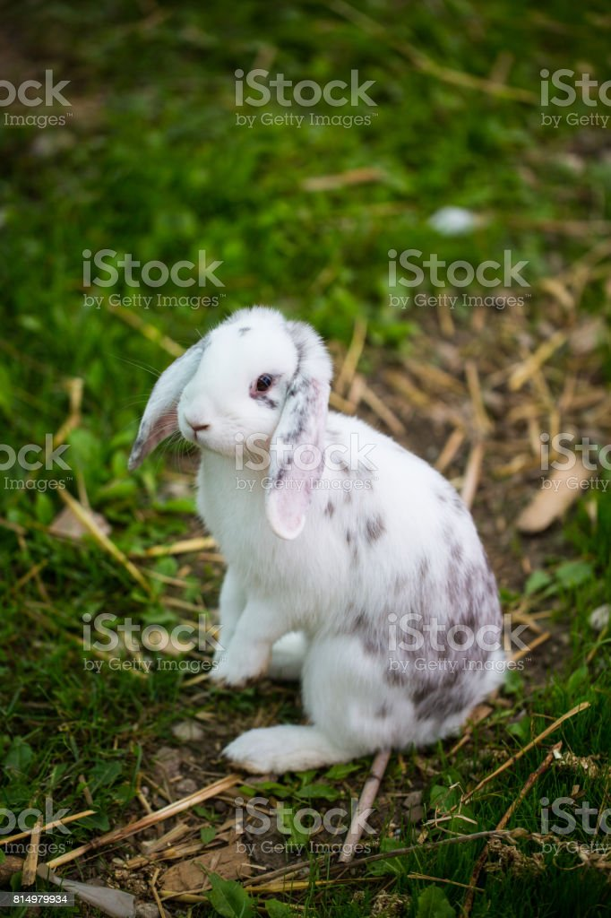 Rabbit standing in the grass stock photo