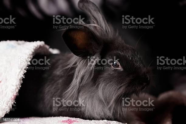Rabbit under a blanket picture id162241328?b=1&k=6&m=162241328&s=612x612&h=xipsds494v9je6hyf8j19iocyrtectd0ggnrhs6bfps=