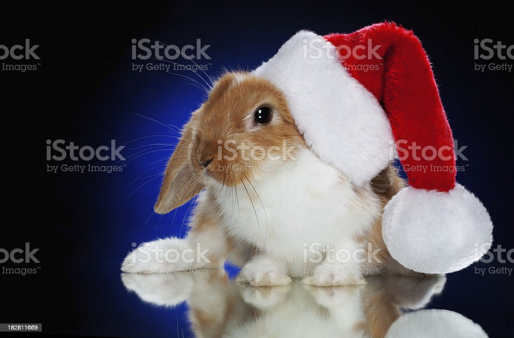 rabbit wearing Santa hat royalty-free stock photo