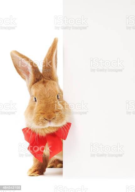 Rabbit with blank picture id484543155?b=1&k=6&m=484543155&s=612x612&h=cunrsmq aamfbn0ik ztkxqsmndeqtdg1zkd mdmpdg=