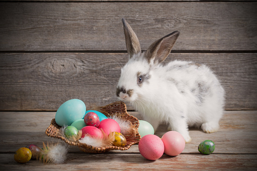 istock rabbit with Easter eggs on wooden background 637885944