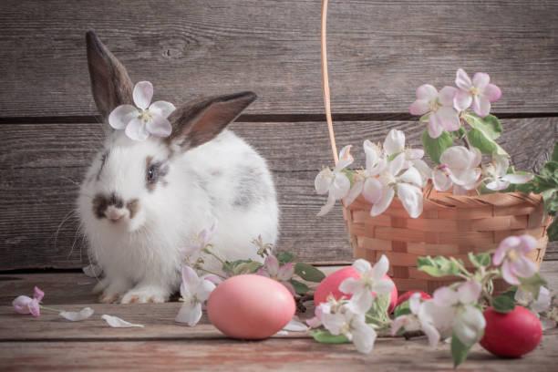 kaninchen mit ostereiern auf hölzernen hintergrund - plüschhase stock-fotos und bilder