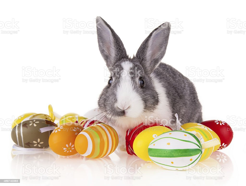 Rabbit with eggs on white background stock photo