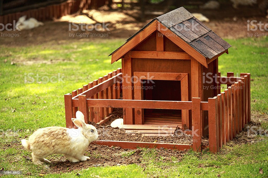 Rabbit with the hutch royalty-free stock photo