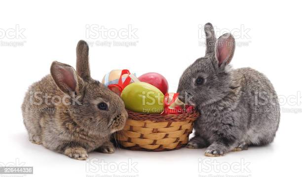 Rabbits and easter basket picture id926444336?b=1&k=6&m=926444336&s=612x612&h=nhtr 8zxtyxxqxgtywzhefusshiw3jdabvspdjzusng=