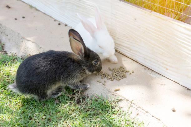 kaninchen hase im garten - plüschhase stock-fotos und bilder