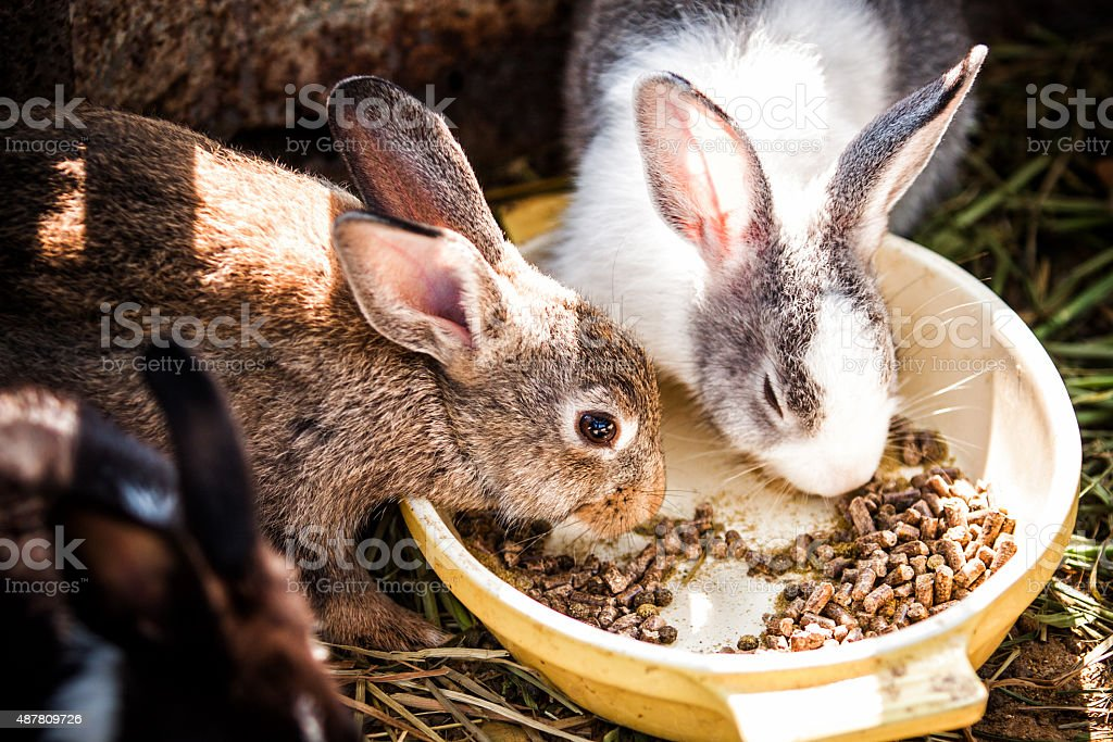 Rabbits eat stock photo