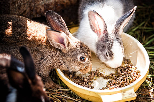 토끼 평균량 스톡 사진