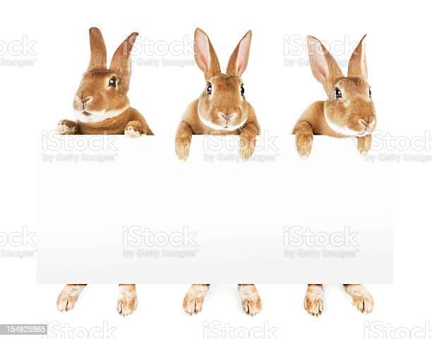 Rabbits holding a banner picture id154925865?b=1&k=6&m=154925865&s=612x612&h=le42ml8zbibodtxhfmfiw70jnsqomdtithgymgpb934=