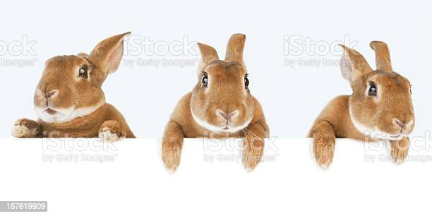Rabbits holding a banner picture id157619909?b=1&k=6&m=157619909&s=612x612&h=onafx3nmihyoelb 7xwijlslyk5qq veih7qqyfkmam=