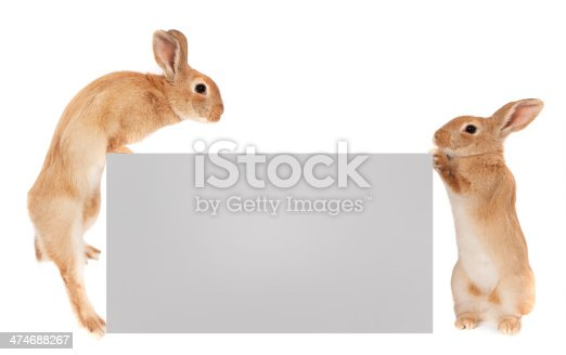 Three Rabbits holding a white banner