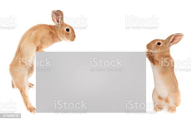 Rabbits holding a banner picture id474688267?b=1&k=6&m=474688267&s=612x612&h=djs 1pelnyzcdfnln1ii6flr1nnztpswtqqn2gq3kvs=