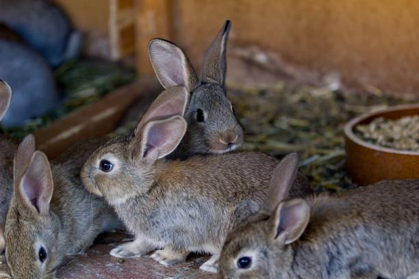 Rabbits in natural color stock photo