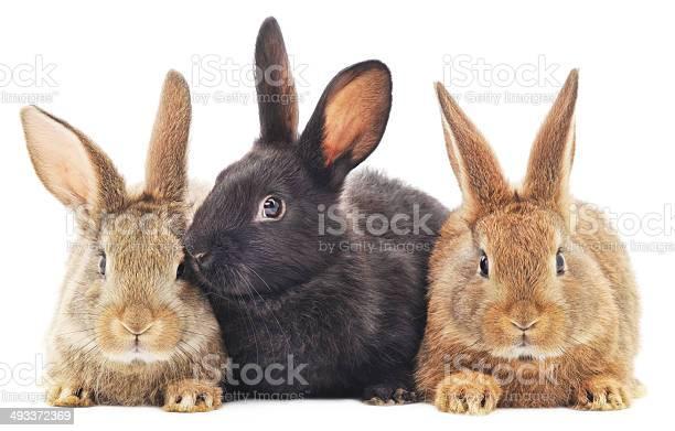 Rabbits picture id493372369?b=1&k=6&m=493372369&s=612x612&h=f3xkvlke9deejodwhjz5hjqnw0issxxppmqk3d9xria=