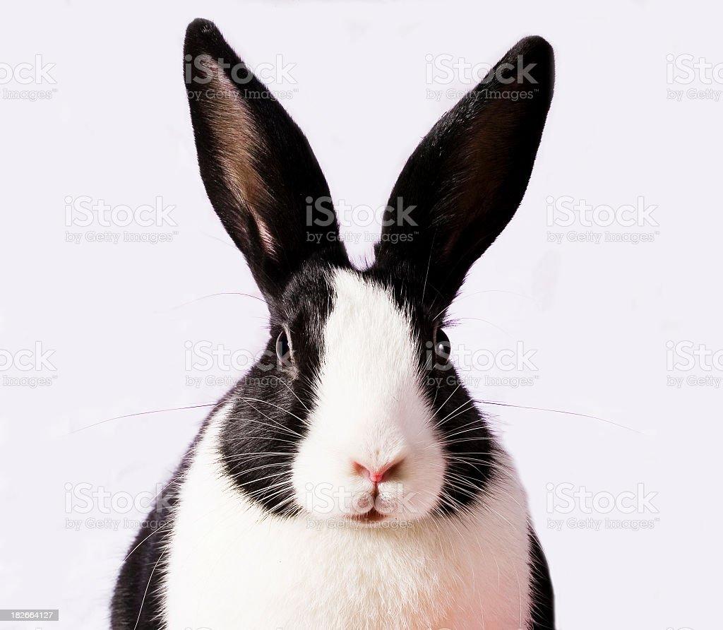 Rabbits view stock photo