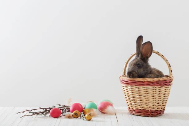 kaninchen mit ostereiern auf dem hölzernen hintergrund - plüschhase stock-fotos und bilder
