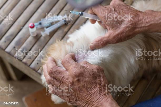 Rabies vaccines dog got a vaccination against the rabies hydrophobia picture id1014560930?b=1&k=6&m=1014560930&s=612x612&h=1clyaqjnsknspixx86uh1uiaurgpvjefidrnquxtbys=