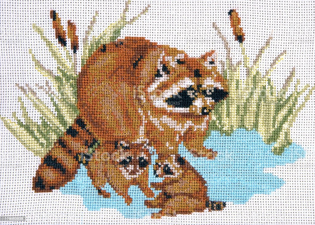 Raccoon royalty-free stock photo