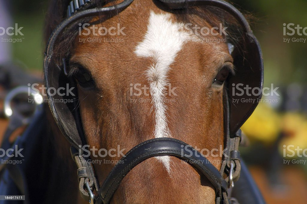 race horse in action stock photo