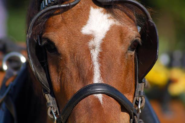race horse in aktion - scheuklappe stock-fotos und bilder