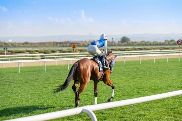 잔디 트랙에 경주 마. - horse racing 뉴스 사진 이미지