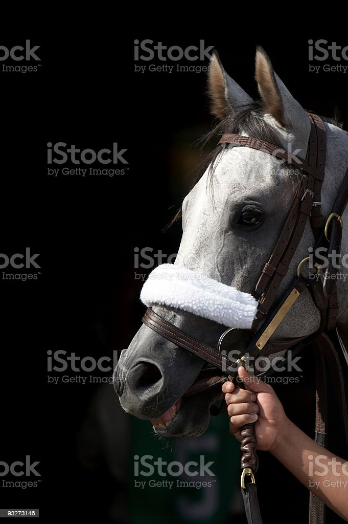 Race Horse royalty-free stock photo