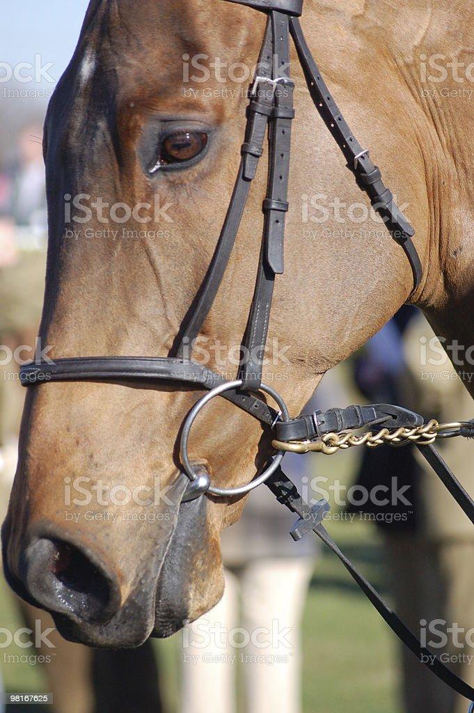 Cavallo da corsa foto stock royalty-free